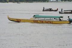 Il Surinam Albina 1 Immagini Stock Libere da Diritti