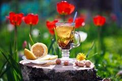 Il tè con il limone e la menta in una tazza di vetro su un lwooden sorgono Fotografie Stock