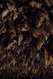 Il tabacco asciutto lascia il fondo Immagini Stock Libere da Diritti