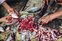 Il taglio e preparare del Rohu pescano sulla terra 2 fotografia stock libera da diritti