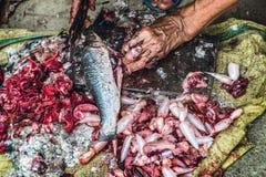 Il taglio e preparare del Rohu pescano sulla terra 3 fotografia stock libera da diritti