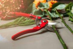 Il taglio rosso di forbici del giardino è aumentato Immagini Stock