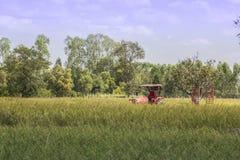 Il tailer del camion nel giacimento del riso Immagine Stock