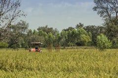 Il tailer del camion nel giacimento del riso Fotografia Stock Libera da Diritti