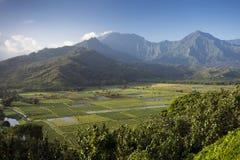 Il taro sistema in valle di Hanalei, Kauai, Hawai Fotografia Stock