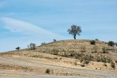 Il tatto dell'albero da solo fotografia stock libera da diritti