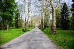 Il tempo di primavera… è aumentato foglie, sfondo naturale immagine stock