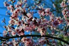 Il tempo di primavera… è aumentato foglie, sfondo naturale immagini stock