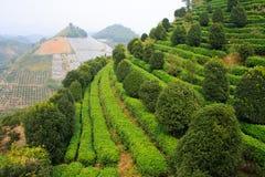 Il terrase del tè. Yangshuo. La Cina. Fotografia Stock Libera da Diritti