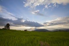 Il terrazzo del riso dentro Baan-PA-Bong-Piang, Chiangmai, Tailandia Fotografie Stock Libere da Diritti