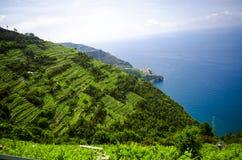 Il terrazzo italiano ha coltivato il lato della montagna Fotografia Stock