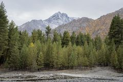Il terreno boscoso nell'inverno Fotografia Stock