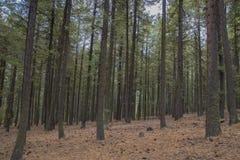 Il terreno boscoso nell'inverno Fotografia Stock Libera da Diritti