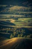 Il terreno coltivabile ha punteggiato con i pioppi ed altri alberi osservati da Te Mata Immagine Stock