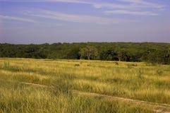 Il Texas Lanscape immagine stock libera da diritti