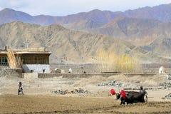 Il Tibet Fotografie Stock