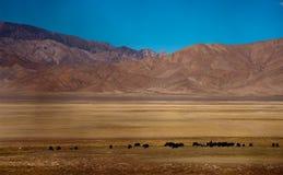 Il Tibet Immagini Stock Libere da Diritti
