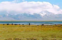 Il Tibet, lago Manasarovar. Fotografia Stock Libera da Diritti