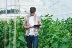Il tipo con la compressa ispeziona lentamente le piante Fotografia Stock Libera da Diritti
