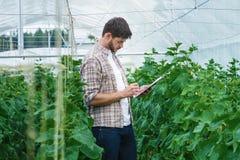 Il tipo con la compressa ispeziona lentamente le piante Immagine Stock Libera da Diritti