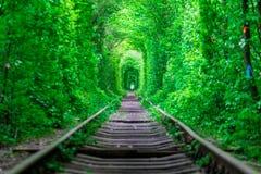 Il tipo con la foresta della molla del tunnel dell'amore della ferrovia del gudlyayut della ragazza Immagini Stock Libere da Diritti