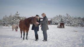 Il tipo ed il cavallo adorabile del colpo della ragazza su un ranch del paese nella stagione invernale Una giovane coppia cammina video d archivio