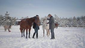 Il tipo ed i cavalli del colpo della ragazza su un ranch del paese nella stagione invernale Una giovane coppia cammina all'aperto stock footage