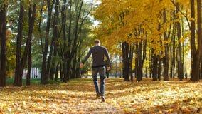 Il tipo funziona lungo un vicolo dell'albero nel parco della città Le foglie di acero gialle cadono in autunno nel giorno soleggi archivi video