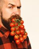Il tipo mostra che il suo uomo del raccolto tiene le bacche del pomodoro come barba Fotografia Stock Libera da Diritti