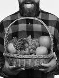 Il tipo tiene l'agricoltura nostrana del raccolto ed il concetto dei raccolti di autunno L'uomo con la barba tiene il canestro Immagini Stock Libere da Diritti