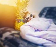 Il tipo, uomo, pantaloni a vita bassa in occhiali da sole riposa a letto, con l'ananas in vetri, stile di vita dell'estate, festa Immagini Stock Libere da Diritti