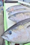 Il tonno sta caricando sopra per trasportare alla fabbrica dei frutti di mare Fotografie Stock