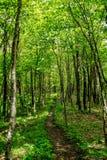 Il traforo verde Fotografia Stock