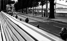 Il tram sta venendo fotografia stock libera da diritti