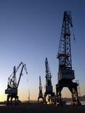 Il tramonto cranes la i Fotografia Stock