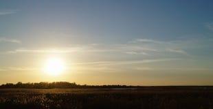 Il tramonto dorato con il campo delle erbe abbellisce la vista Immagini Stock