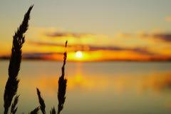Il tramonto dorato sopra il lago con la luce solare splende attraverso i precedenti delle piante Fotografie Stock