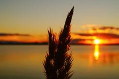 Il tramonto dorato sopra il lago con la luce solare splende attraverso i precedenti delle piante Immagini Stock