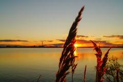Il tramonto dorato sopra il lago con la luce solare splende attraverso i precedenti delle piante Fotografia Stock Libera da Diritti