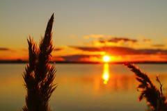 Il tramonto dorato sopra il lago con la luce solare splende attraverso i precedenti delle piante Immagini Stock Libere da Diritti