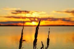 Il tramonto dorato sopra il lago con la luce solare splende attraverso i precedenti delle piante Fotografia Stock
