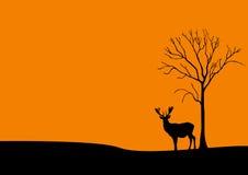 Il tramonto ed i cervi si avvicinano all'albero Immagini Stock Libere da Diritti