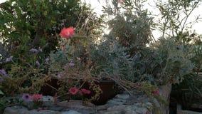 Il tramonto illumina i fiori in un'aiola con differenti piante stock footage