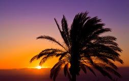 Il tramonto porpora ed arancio con una palma immagini stock
