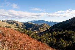 Il transmorrisonensis di Miscanthus nell'alta montagna Fotografia Stock