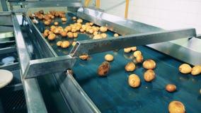 Il trasportatore automatizzato muove i lotti delle patate gialle in una pianta alimentare archivi video