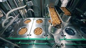 Il trasportatore automatizzato riempie i contenitori di pani asciutti in una pianta alimentare stock footage
