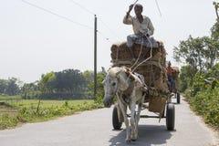 Il trasporto del cavallo è tipo molto popolare di trasporto nel nostro paese È utilizzato nell'occasione Così, è la nostra cultur immagine stock