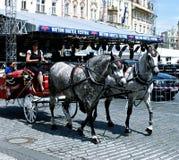 Il trasporto ha tirato dai cavalli sulla via di Praga Immagini Stock Libere da Diritti