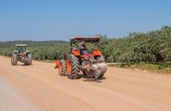 Il trattore agricolo ha investito il campo della mela della scimmia Immagini Stock
